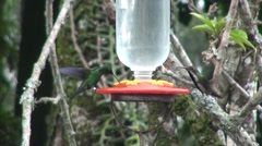 Hummingbirds feeder Stock Footage