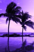 Stock Photo of coconut tree silhouette on the beach