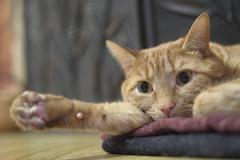 bored kitty - stock photo