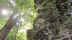 Tracking shot of sun breaking through treetops, cliff in fg Stock Footage