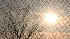 Sunset in Autumn Shoting Through a Wire Fence. Tree Without Leaves Stock Footage