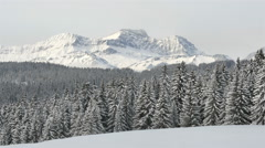 White winter season mountain landscape with fir trees forest covered in snow Stock Footage