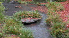 Stream and Fallen Leaves at Tenryuji Temple in Kyoto, Japan Stock Footage