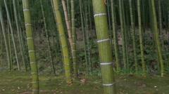 Garden at Tenryuji Temple in Kyoto, Japan Stock Footage