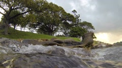Waves submerge camera and land underwater with bush background Stock Footage