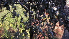 Dry vine leafs at sunlight garden background Stock Footage