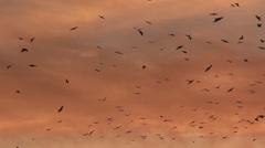 Birds migration Stock Footage