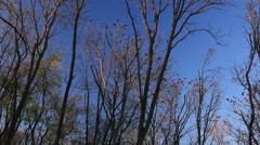 Darkening in naked forest Stock Footage