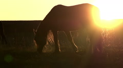Pasture at Sunset Stock Footage