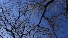 Trees naked branches at blue sky background Stock Footage