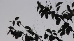 Mosquitos between tree twigs Stock Footage