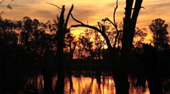 Lake Mulwala sunset, Murray River Australia Stock Footage