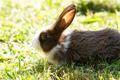 Cute bunny in green grass in the garden Stock Photos