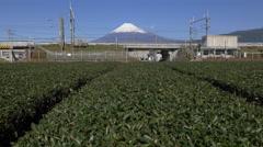 Shinkansen Train Passes Mount Fuji and Tea Field Stock Footage