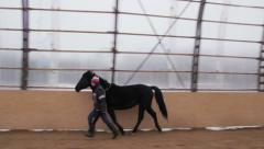 Horse in manege Stock Footage