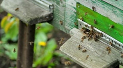 Bees fly from the hive on a sunny day. close-up Stock Footage