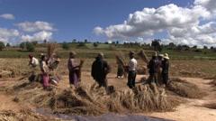 Myanmar - Farmers during threshing 02 Stock Footage