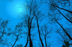 Moon behind the bare branches at night. Stock Illustration