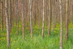 tree trunks in greenery - stock photo