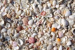 collection of beach seashells background - stock photo