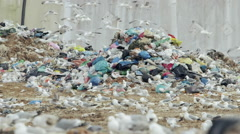 Trash garbage in huge landfill with birds searching the garbage,eating Stock Footage