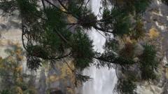 Cedar Branches at Nachi Falls in Wakayama, Japan Stock Footage