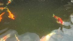 Koi or Japan Fancy Carp swimming in pond Stock Footage