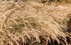 grass in autumn season - stock photo