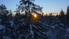AERIAL: Sun shining through snowy trees at winter sunrise Stock Footage