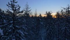 AERIAL: Snowy forest at sunrise in winter Stock Footage