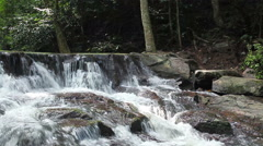 forest waterfall at National Park and tree in the middle, close up - stock footage