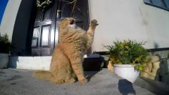 cat playing in front of the garden in slow motion - stock footage