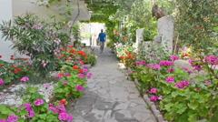Geranium flower garden Stock Footage