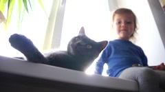 The child and cat on a windowsill - stock footage