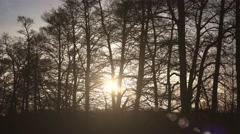 winter sun light trees countryside rural scene - stock footage