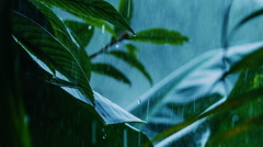Tropical rain - stock footage