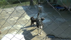 Dogs in a dog pound Stock Footage