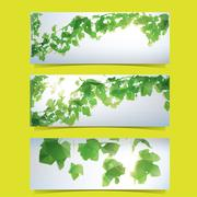 foliage banner set - stock illustration