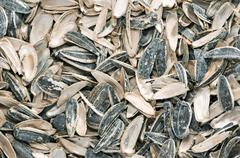 sunflower seeds with shell scours - stock photo