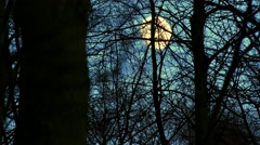 Full Moon view through branches of tree Stock Footage