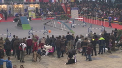 Crowd of people at the dog show,people watching dog agility Stock Footage