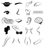 women body parts human vector - stock illustration