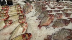 Seafood on Ice at the Fish Market Stock Footage