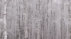 Panning snowy winter forest Stock Footage