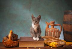 Cat posing for on a book on the table Stock Photos