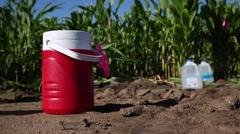 Cornfield and kids water jugs Stock Footage