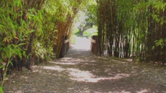 Vllege Road with Bridge in the Jungle Stock Footage