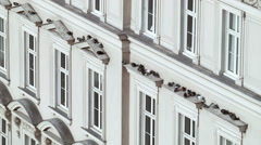 Pigeons 001 sitting on fassade in vienna Stock Footage