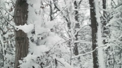 Winterwoods 002 tilted upwards with falling snow Stock Footage