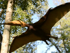 The flying dinosaur. Related clips are in my portfolio in 1920x1080. - stock footage